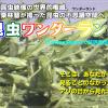 栗林慧の昆虫ワンダーランド – 昆虫たちの不思議な世界を最高の映像で