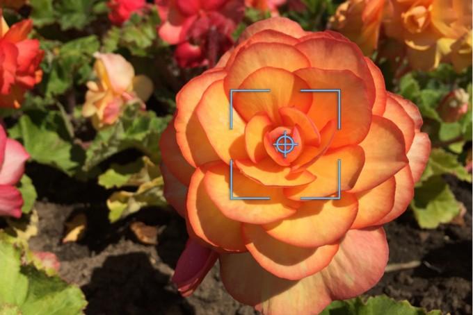 flower_focus_landscape1