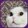 猫からのメッセージ。悩む時、迷う時、暇な時、そっと一枚ひいてみて。『猫託〜猫からのメッセージ〜』